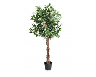 Edenbloom 120cm Ficus tree
