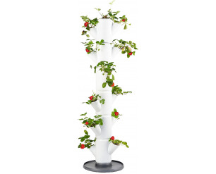 GSD Sissi Strawberry Planter Classic - White