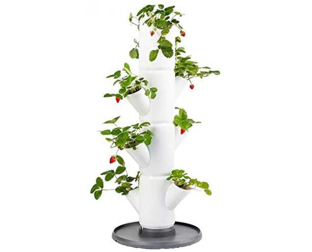 Sissi Strawberry Planter Starter - White