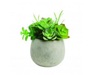 14cm Medium Potted Succulent