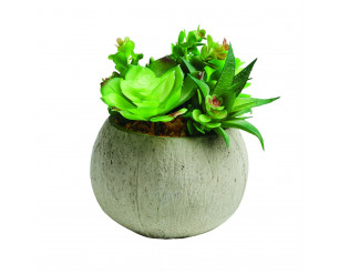 16cm Large Potted Succulent