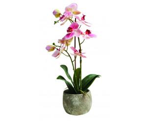 45cm Large Orchid
