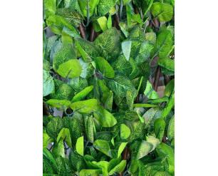 0.6m x 1.8m Laurel Leaf - Medium